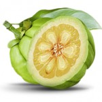 Fruit of Garcinia Cambogia